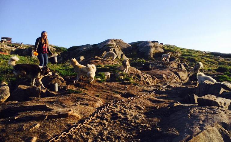 Tupaarnaq-fodrer-hundene